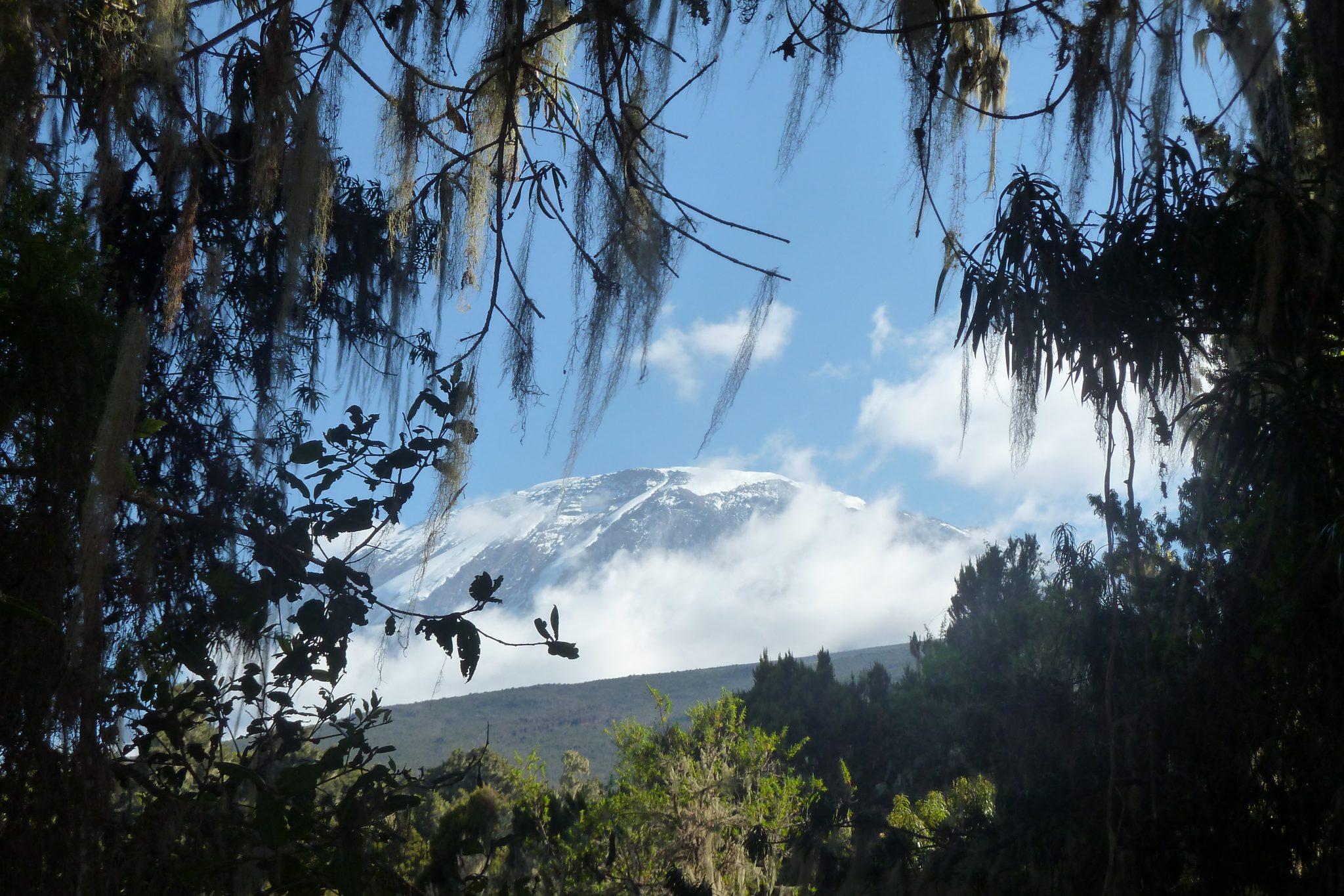 20-kilimanjaro-desde-mweka