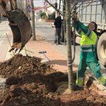 El Ayuntamiento Realizará Diversas Plantaciones Por Todo El Municipio