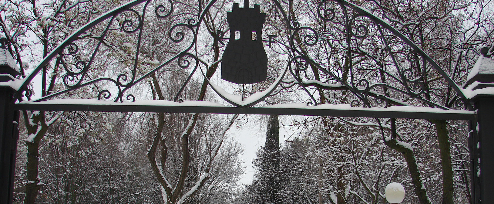 Banner Nieve
