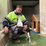 La Perrera Municipal Registró 39 Adopciones En 2018